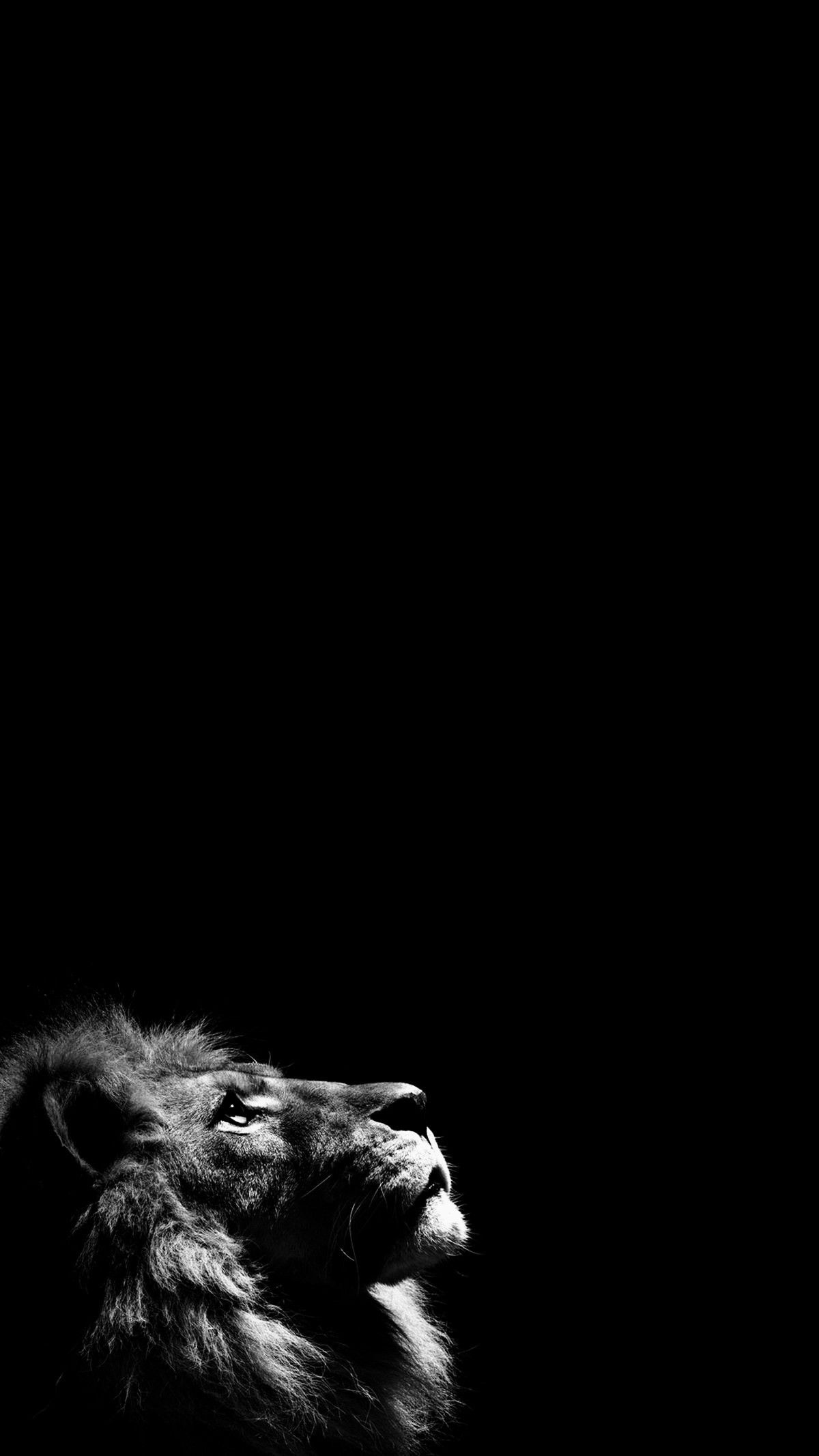 Loyalty And Fearlessness Lion Wallpaper Iphone Black Wallpaper Iphone Dark Wallpaper Iphone