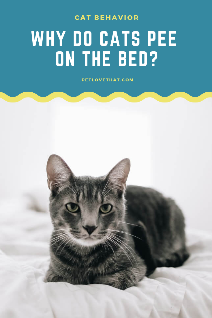 Why Do Cats Pee On The Bed Cat behavior, Cat pee, Cat