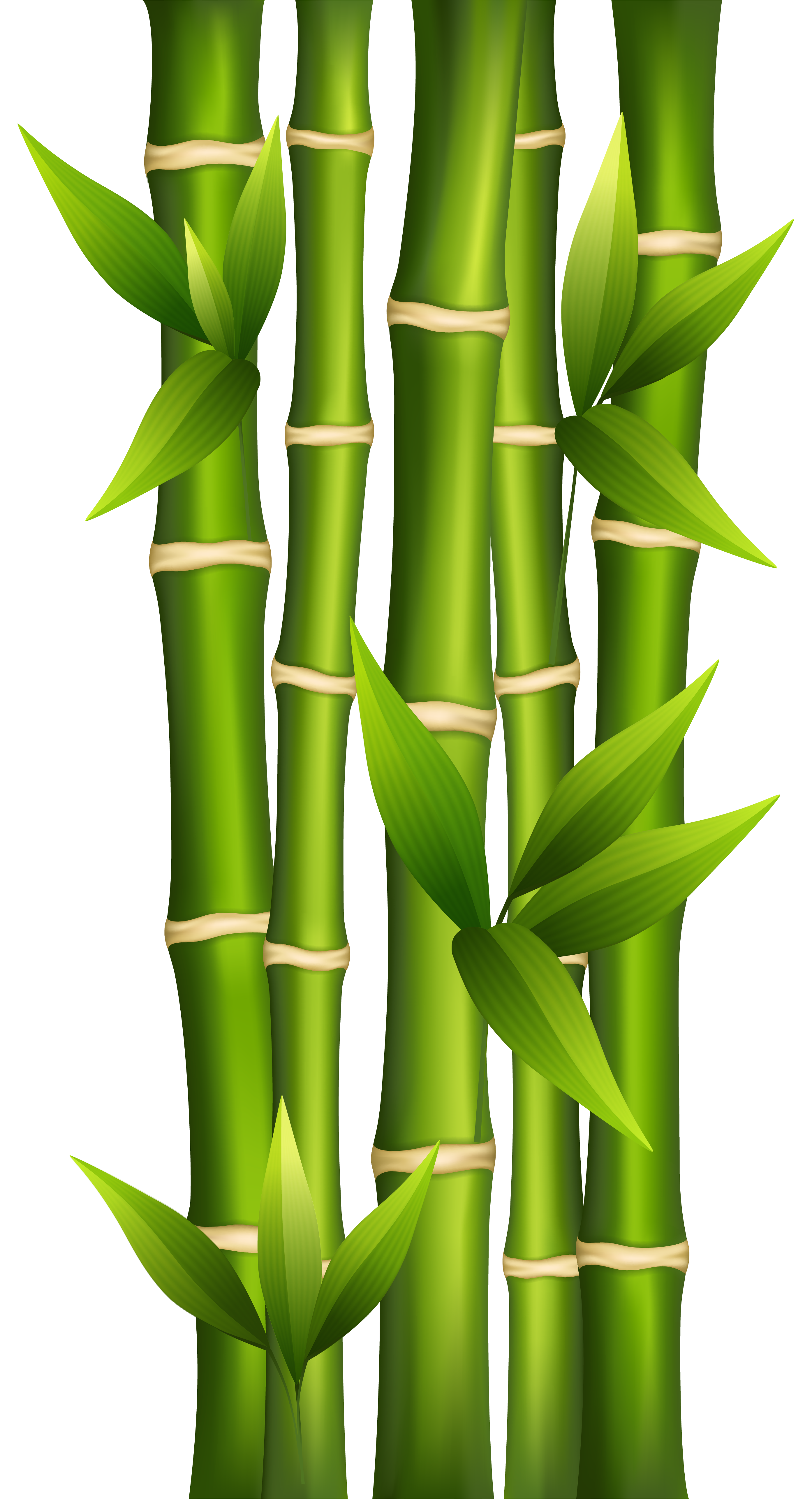 bamboo png clipart image | bamboo drawing, bamboo art, bamboo background  pinterest