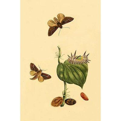 Buyenlarge Surinam Butterflies Moths And Caterpillars By Jan Sepp Graphic Art Art Prints Moth Caterpillar Graphic Art