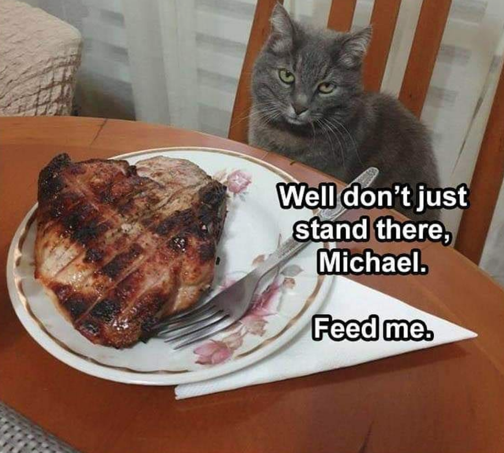 Caturday Memes Bring Out The Toe Beans 48 Cat Memes Funny Thanksgiving Memes Funny Animal Pictures Animal Memes Clean