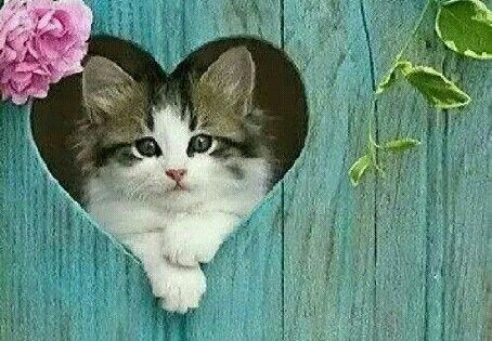 cat, lovely, and cute resmi
