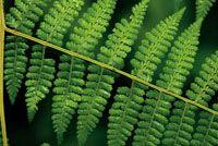 En las zonas poco iluminadas del sotobosque predominan los arbustos pequeños, las plantas rastreras, los helechos y los hongos.