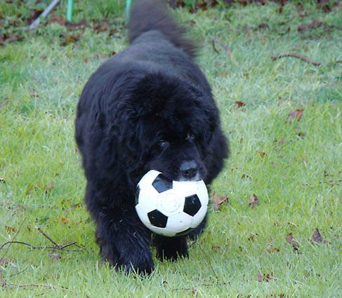 That soccer ball must be tastey