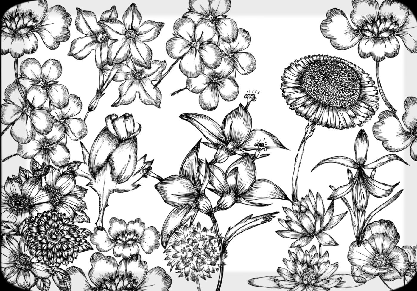 Hand drawn flowers free brush pack by www