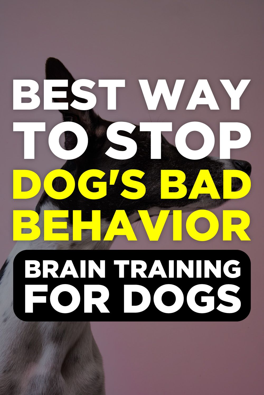 Brain Training For Dogs Review Clicker Training Puppy Dog