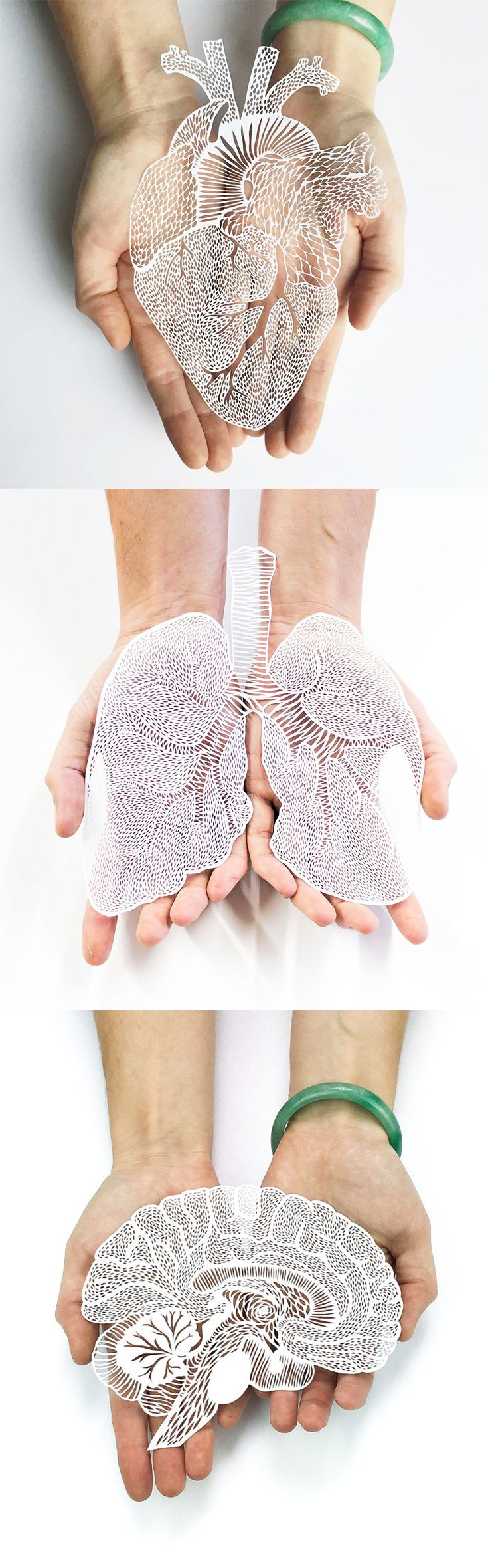 Click for more pics! Intricately Detailed Hand-Cut Anatomical Organs Out Of Paper by Ali Harrison #paperart