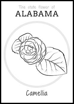 Free Alabama State Flower Coloring Page