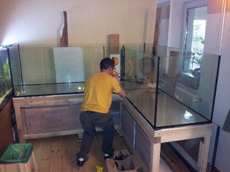 "Aquaristik Dresden a… | ""under glass""_ aquariums (brackish, fresh, reef & salt"
