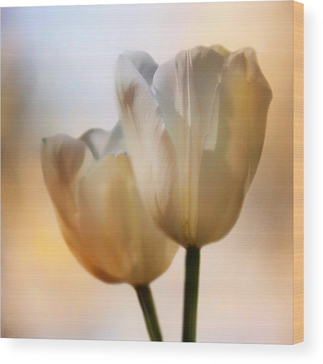 """""""Tulip Pair"""" by Nikolyn McDonald is a floral with an almost opalescent look.  Print these lovely spring flowers on wood so the grain shows through for a look that is both contemporary and feminine. square,format,nikki,nikolyn,mcdonald"""