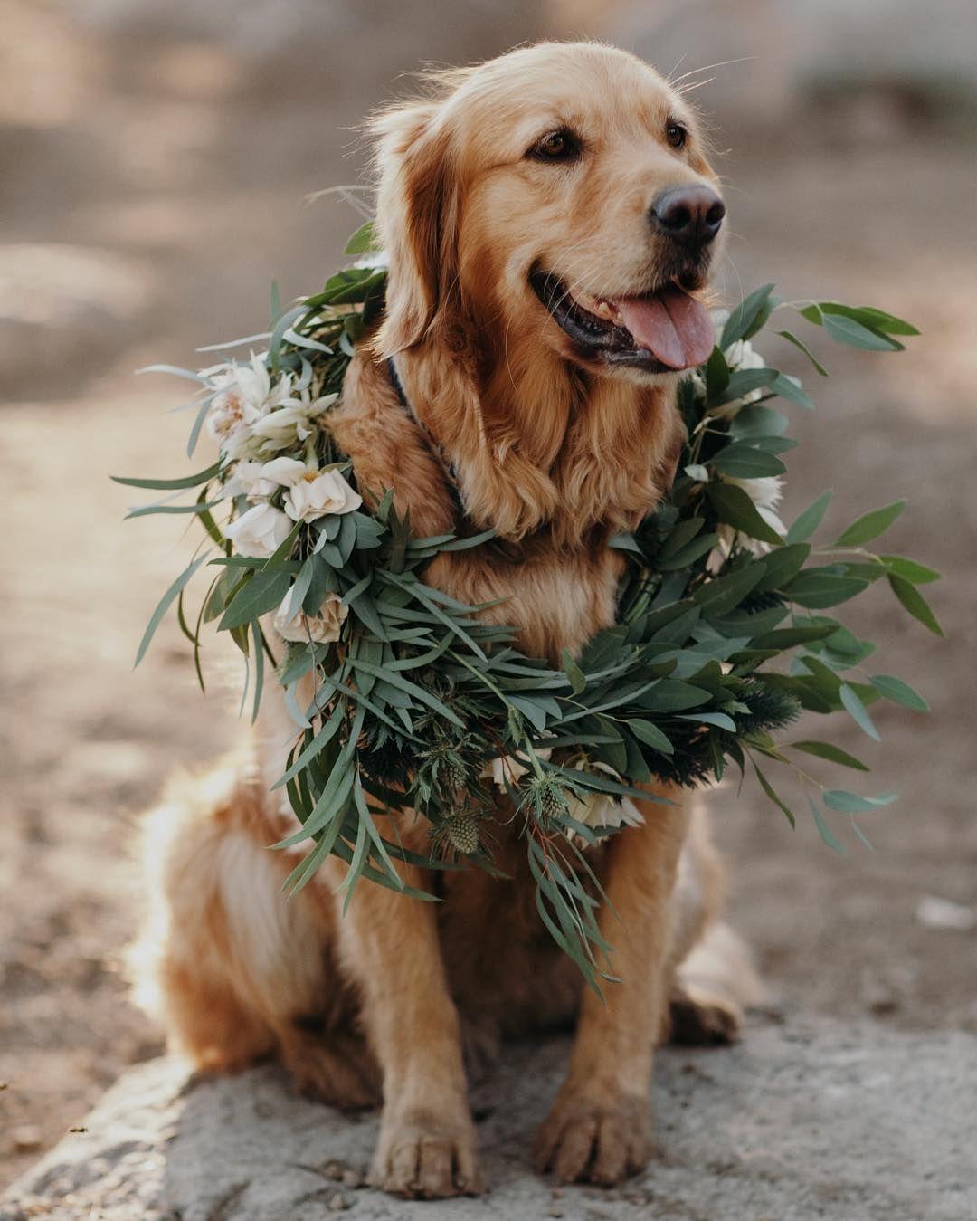 Golden retriever by Andrea Gehrke on Dogs Wedding pets