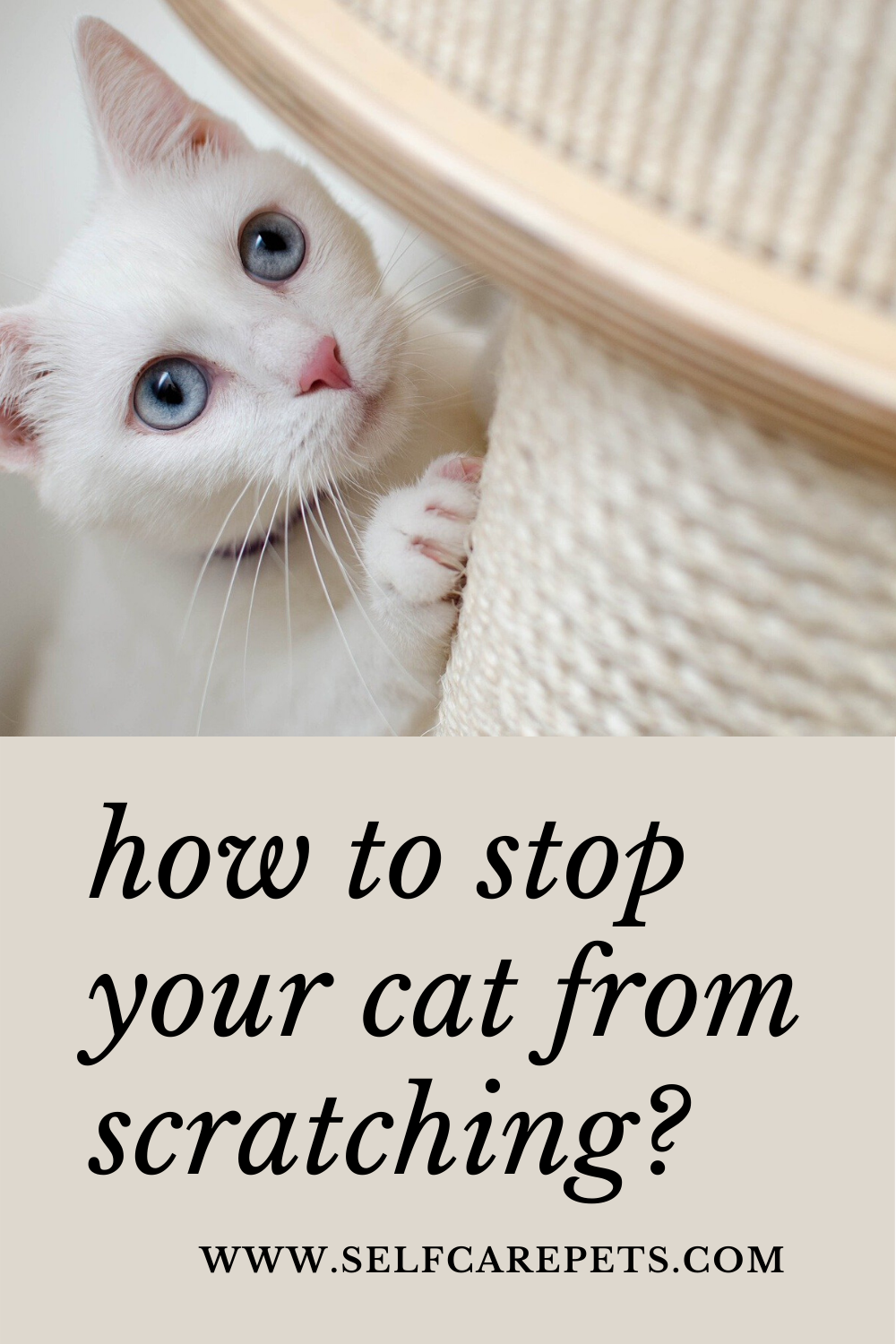 How To Stop Your Cat From Scratching In 2020 Cats Dog Training Cat Training