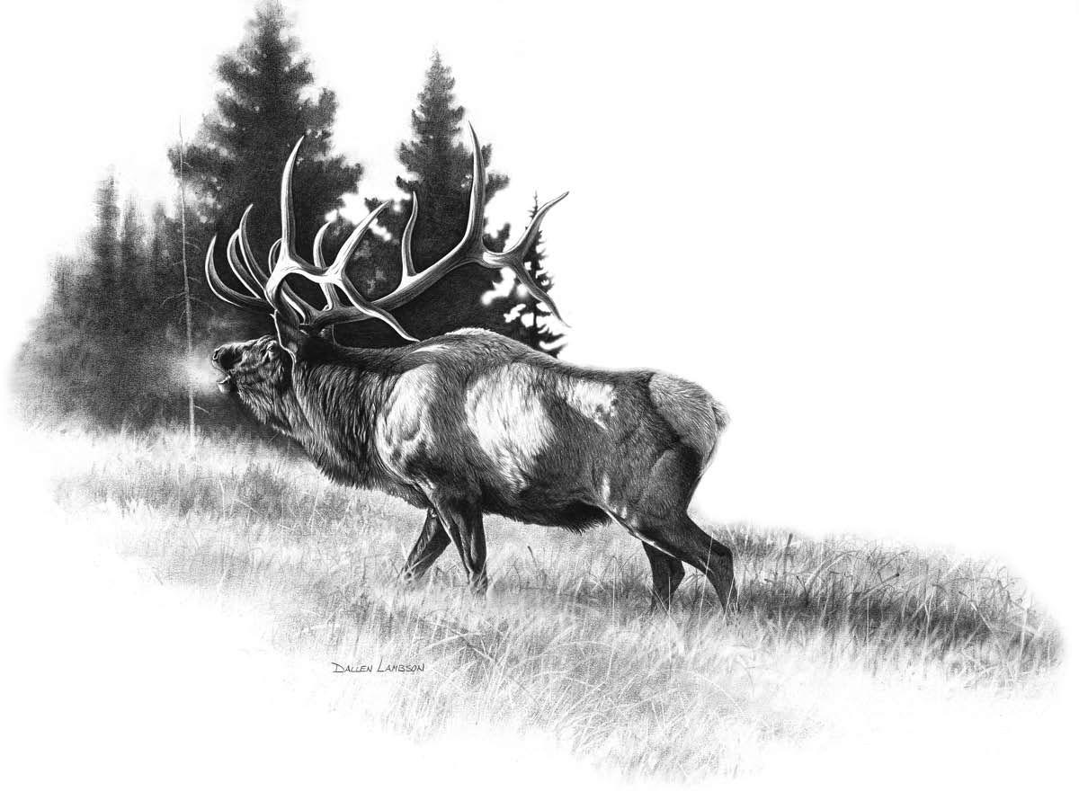 Elk Head Drawings Elk Tattoo