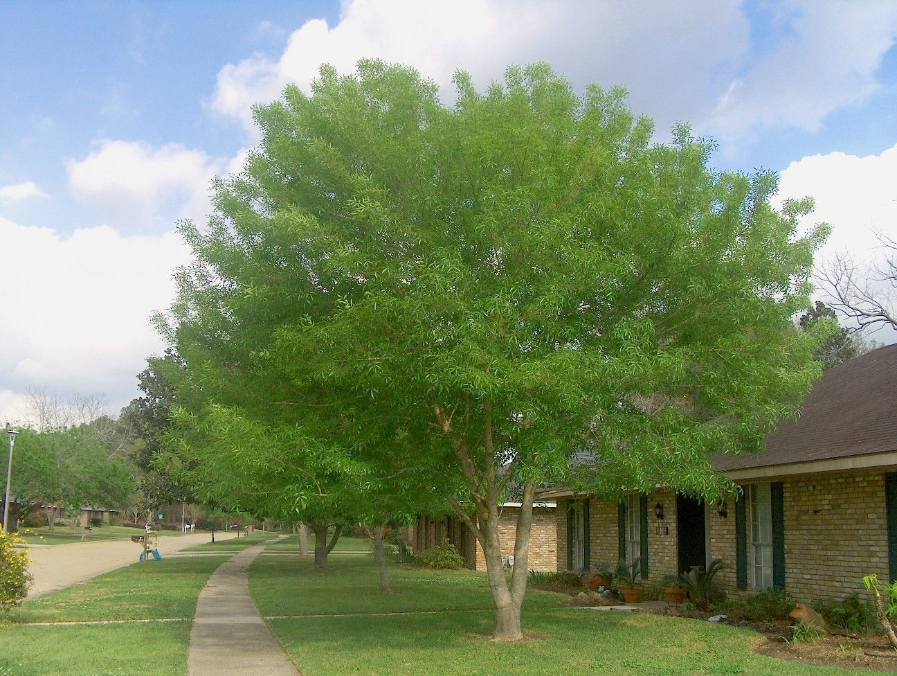 Outdoor Plants Full Sun Landscaping Front Yards