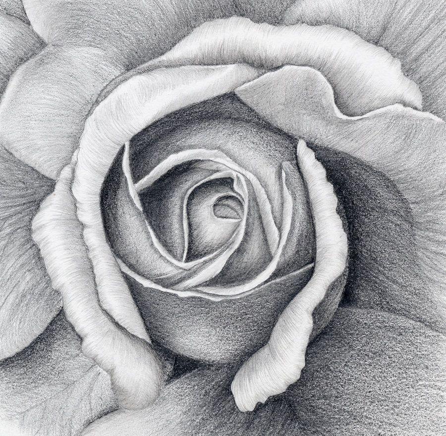 drawing of a rose rosen mit bleistift pinterest rose gezeichnet bleistift und zeichnen blumen. Black Bedroom Furniture Sets. Home Design Ideas