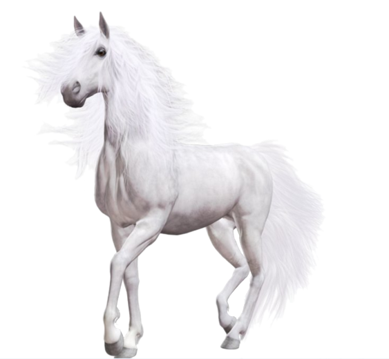 White Horse Png Horse Png Horse Clipart Transparent Horses White Horse White Horses