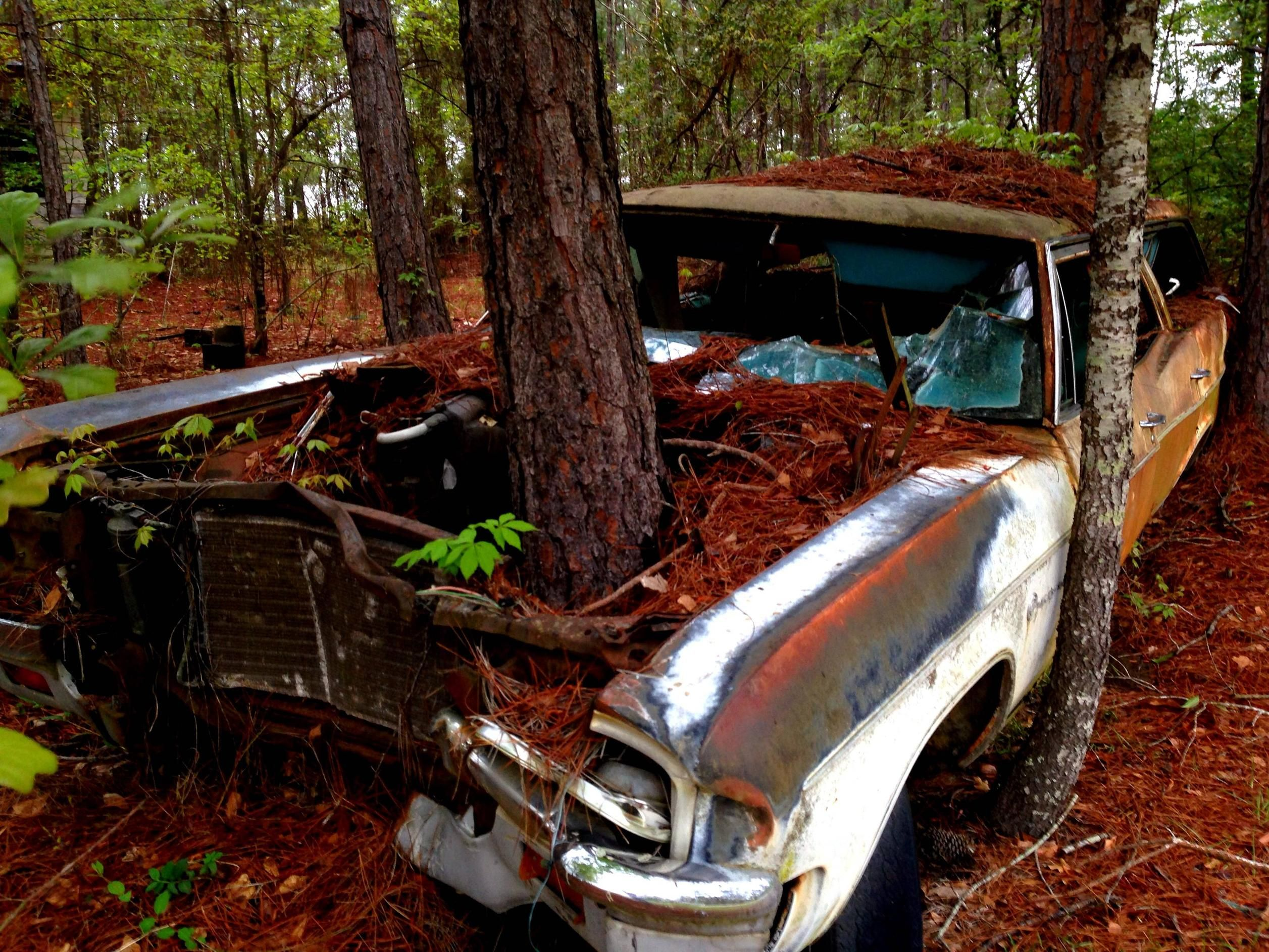 Abandoned Cars Regained by Nature | Abandoned, Abandoned cars and ...