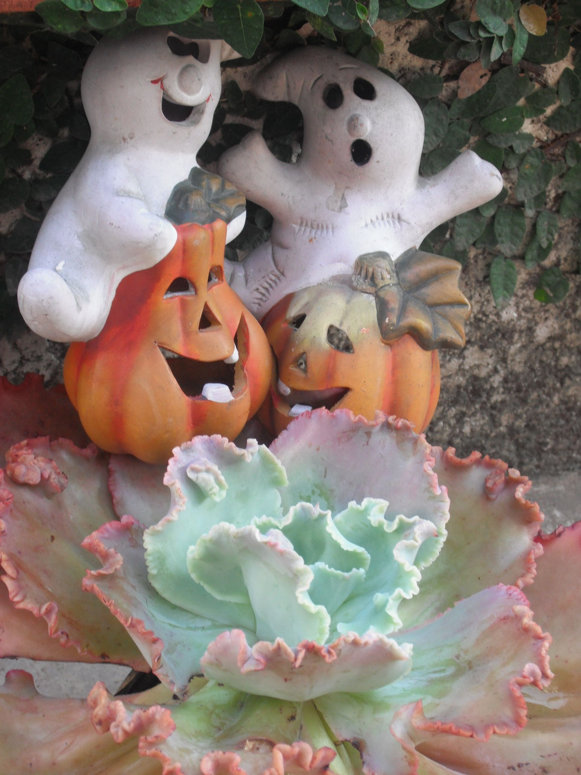 succulent sissies so excited for hallowe'en