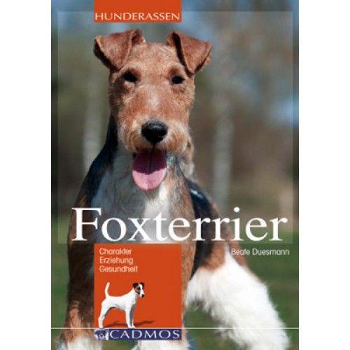 Foxterrier - Hunde