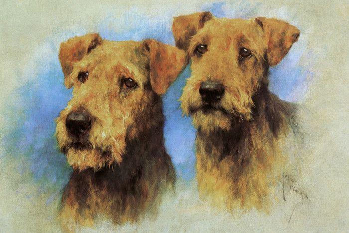 Airedale Terrier Head Studies By Arthur Wardle Fine Art Print