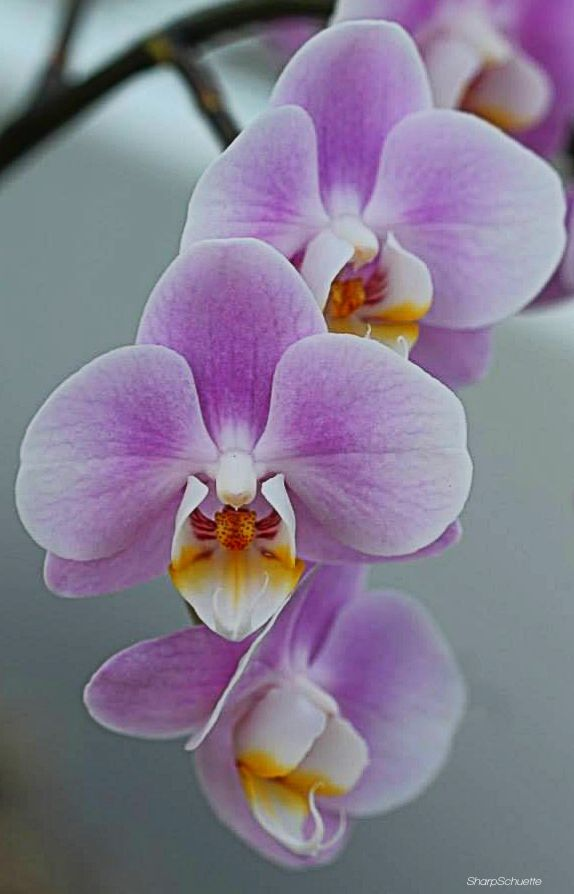 Orchids At The Franklin Park Conservatoey Orchid Photography Orchid Flower Beautiful Orchids