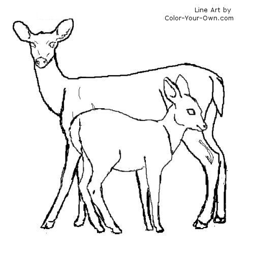 Line Drawing Deer : White tailed deer fawn drawing images pictures becuo in