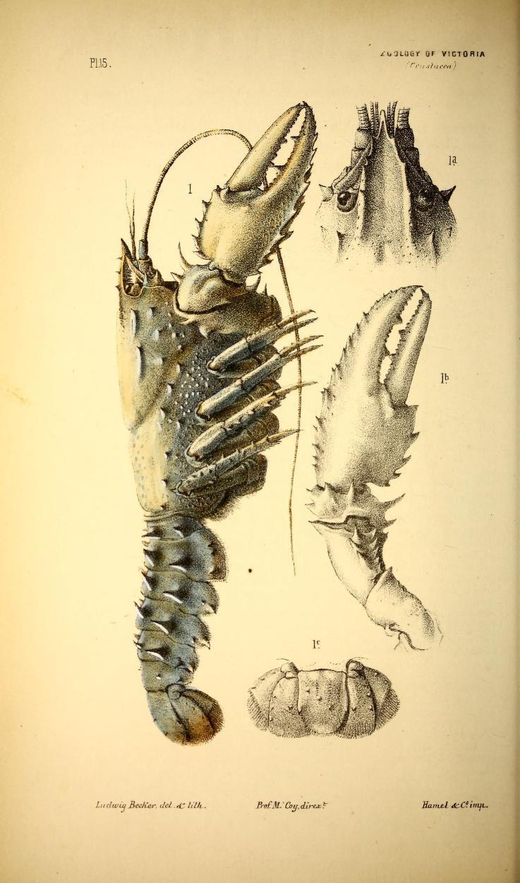 V 11885 Natural History of Victoria Biodiversity Heritage