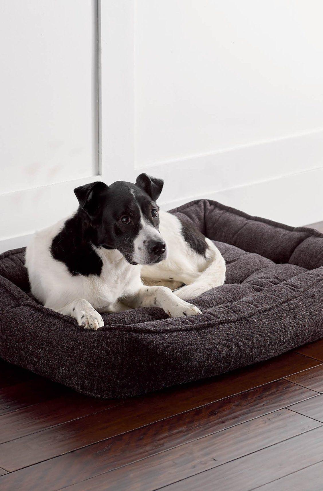 Contempo Lounge Pet Bed Pets Pet Home Your Pet