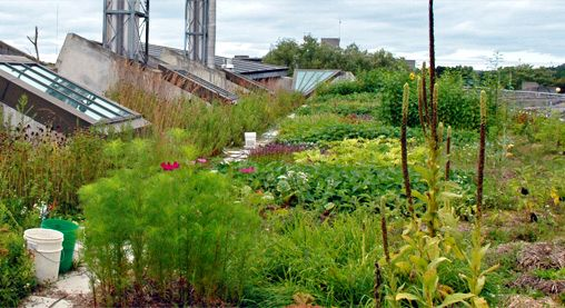 Urban Rooftop Farming Herb Garden Wall Living Room Green Rooftop Garden