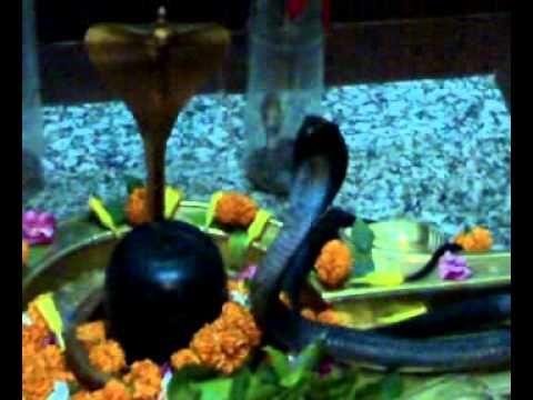 Snake In Shiv Temple.mp4