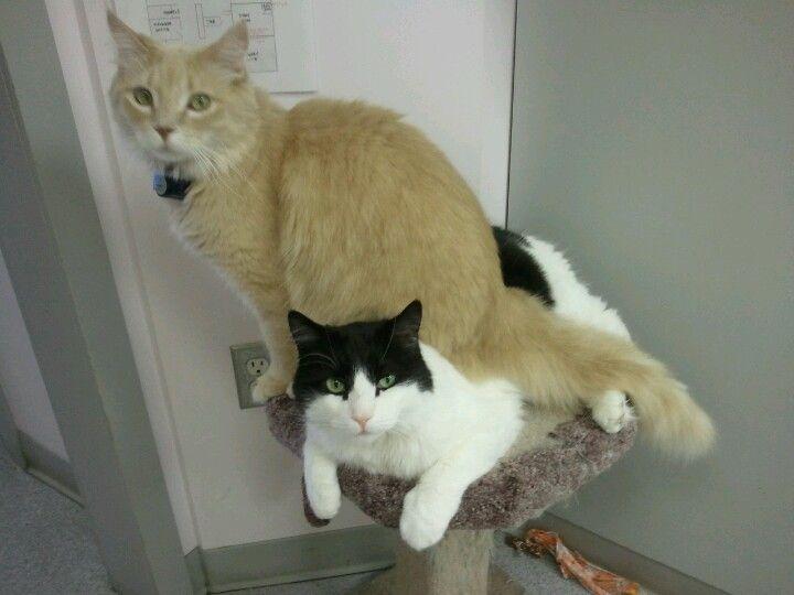 Terra Losa animal clinic cats