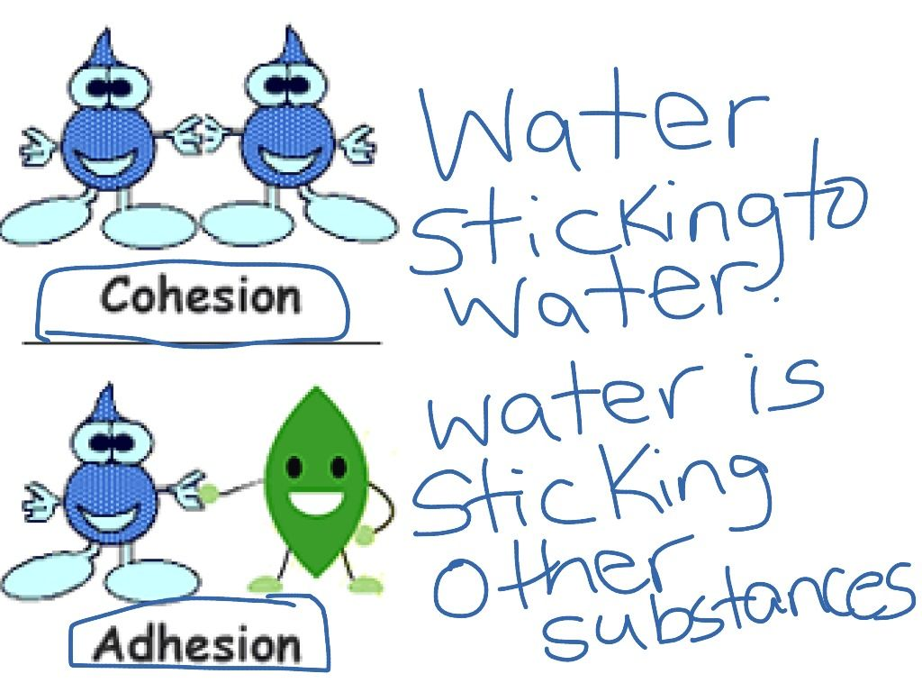 Cohesion And Adhesion Cartoon