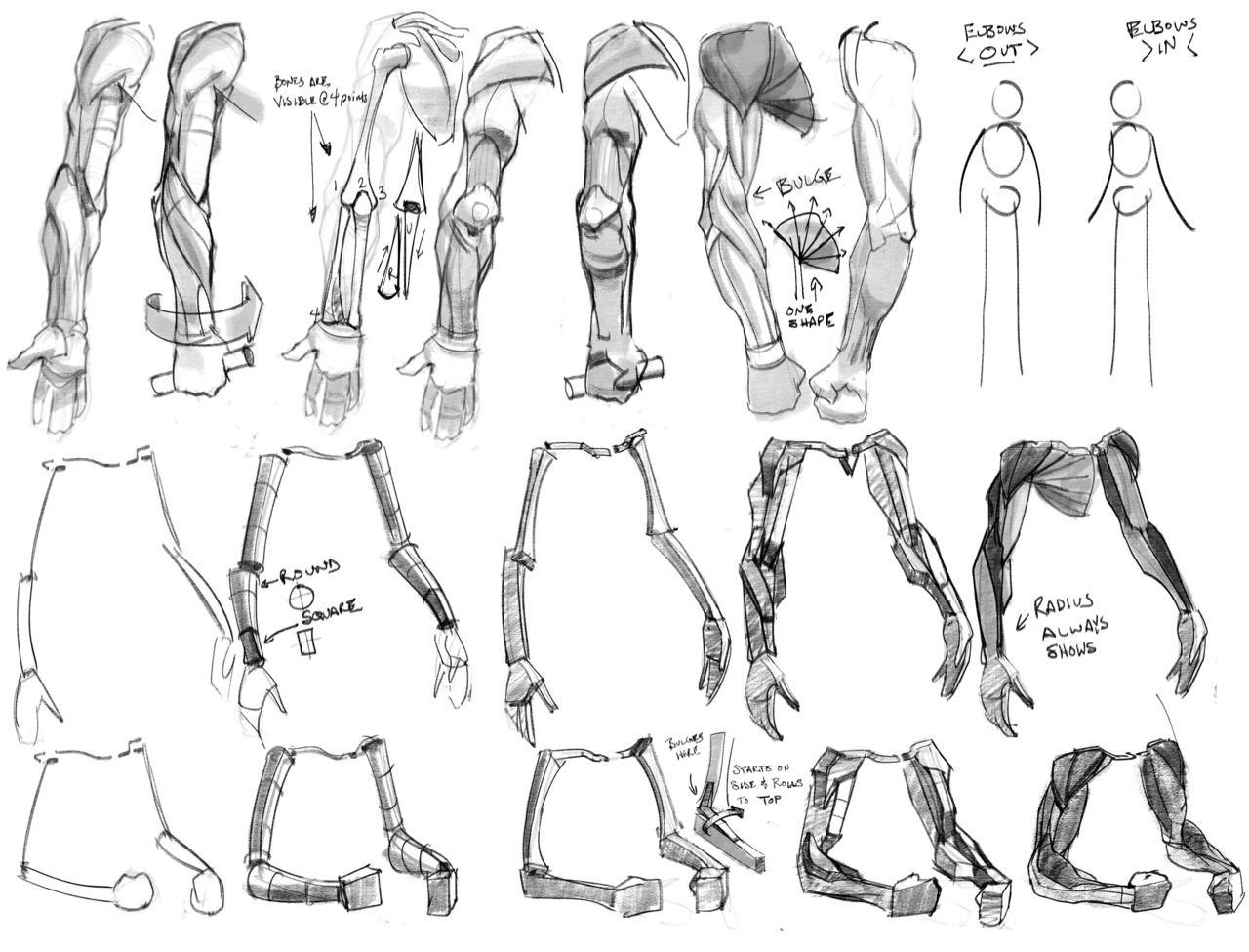 Arms. Anatomy for Artists. | Anatomy for Artists | Pinterest ...