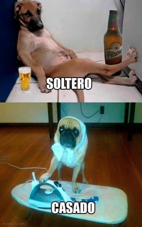 Pin De En Memes Borrachos Chistosos Fotos De Risa Memes De Chicas