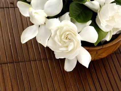 Gardenia Grace Flower Meanings Flowers Language Of Flowers
