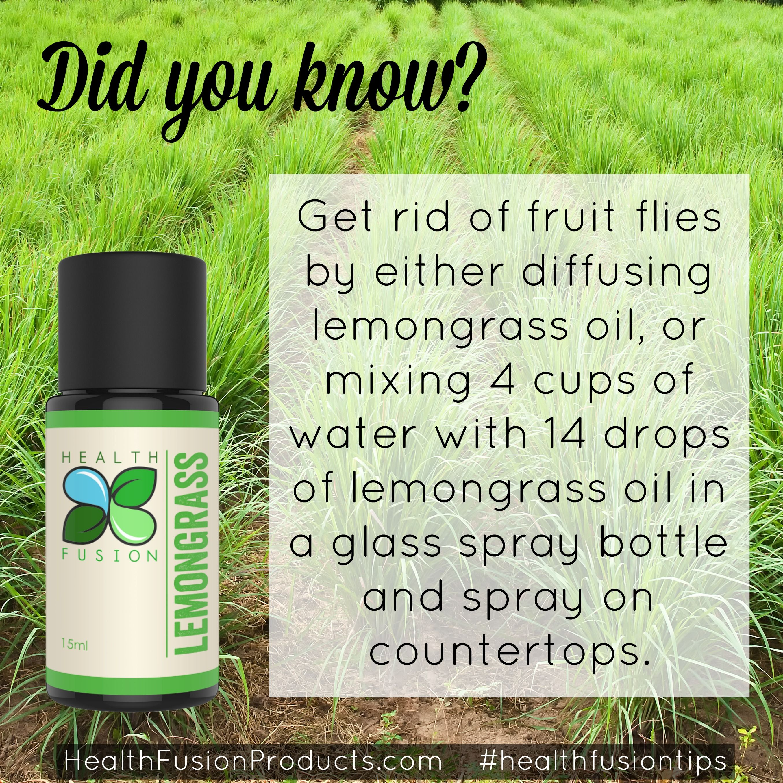 No more fruit flies household tips pinterest