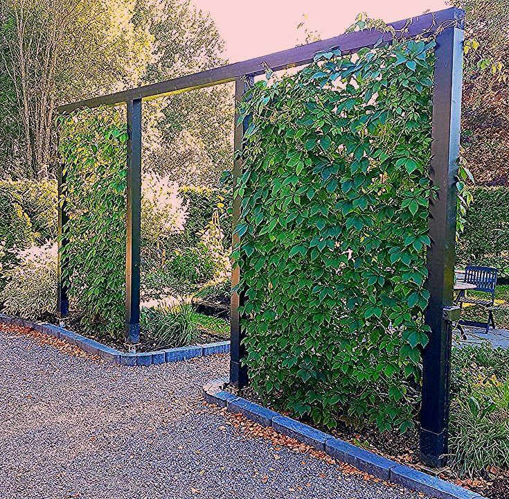 Gartengräser Sichtschutz
