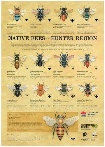 Australian native bees | Stingless bees, Bee keeping ... on native plant garden, native wildflower garden, native perennial garden, native bee habitat,