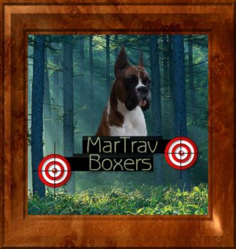 Boxer puppies for Sale Boxer Breeder Maine MarTrav