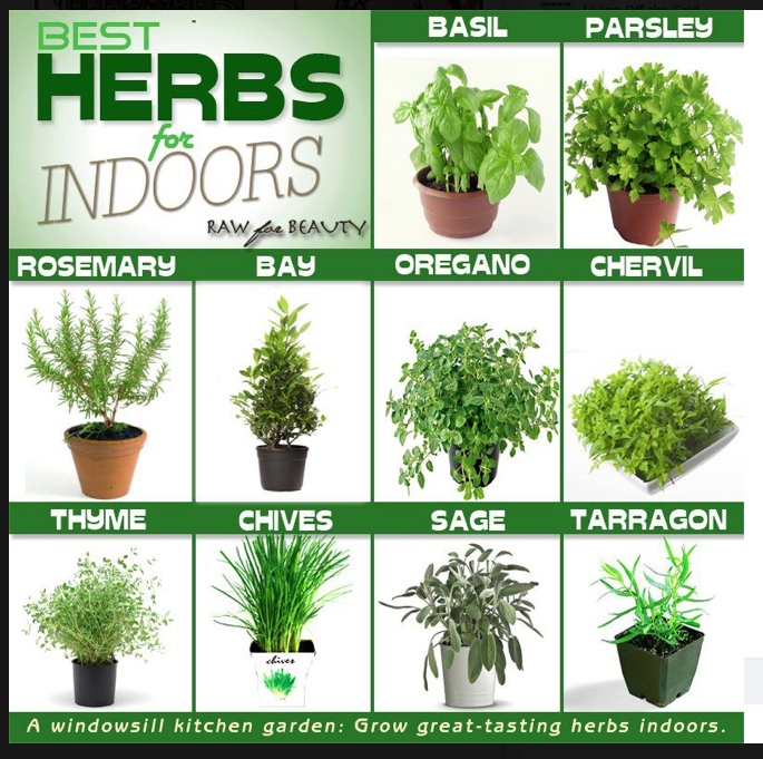 You Can Also Grow Chives In A Cup With Water On Your Window Sill I Had Some That Got A Bit Wilted Indoor Herb Garden Best Herbs To Grow Container Herb