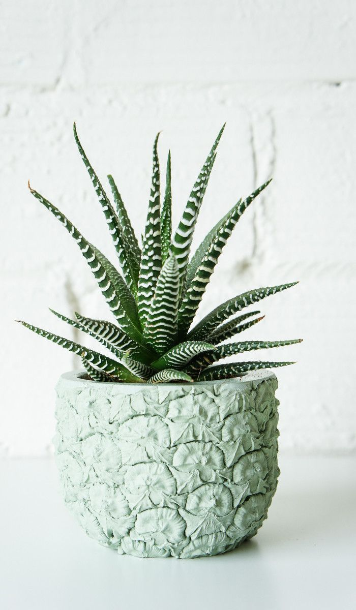HOME I| Cast Cement Pineapple Planter