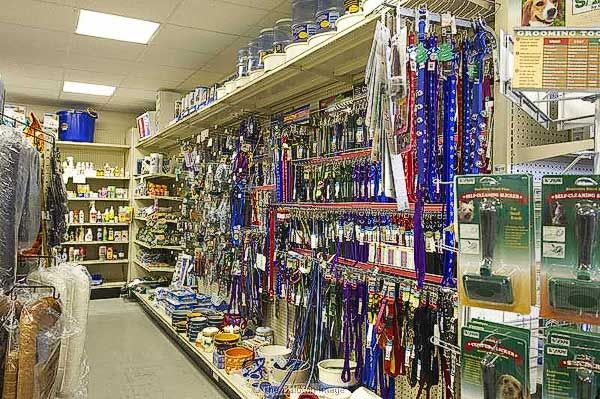 Marvelous Dog Store Online Dog Store Dogs Online Store