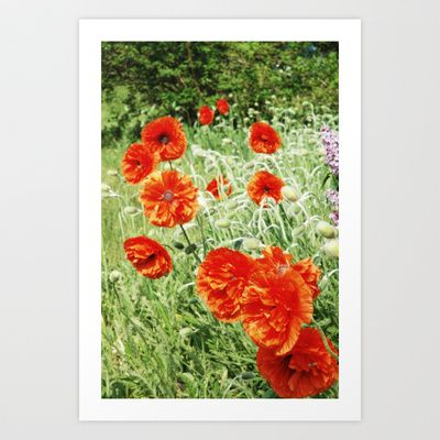 Red Poppies Art Print by Joy StClaire