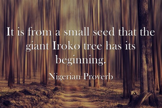 It is from a small seed that the great Iroko tree has its beginning. -  NIgeria Proverb. | Words, Life after death, Own quotes
