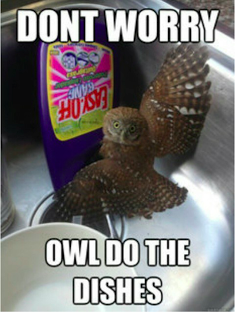 Owl Puns Never Get Old Owls