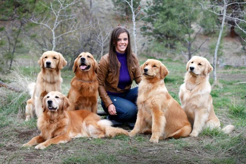 Nadina Goldens Kelowna Dog Pictures Pets