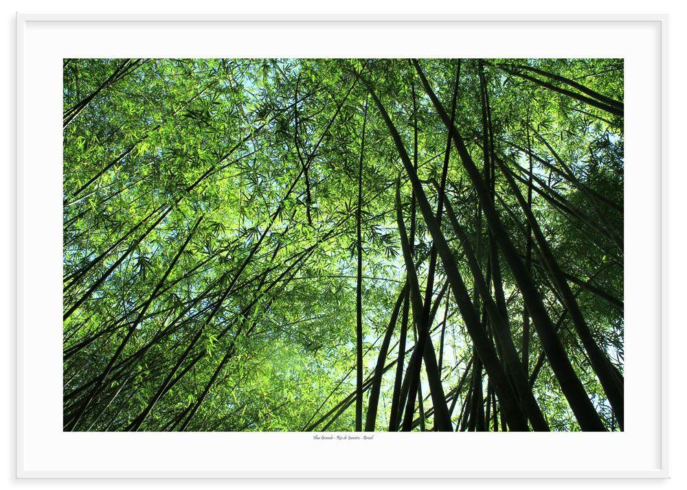 10 - Bambú 1