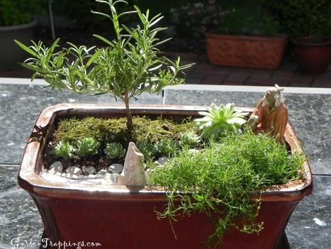 diy miniature zen garden and rosemary bonsai garden. Black Bedroom Furniture Sets. Home Design Ideas