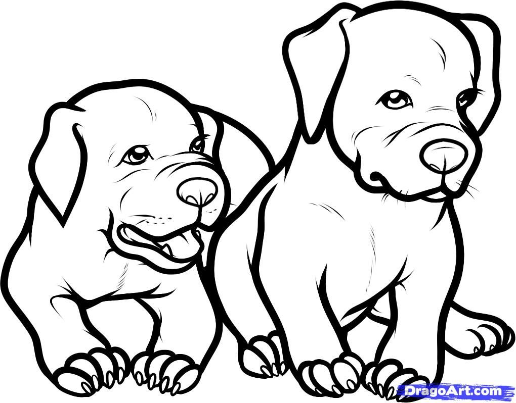 pit bulls coloring pages - photo#32