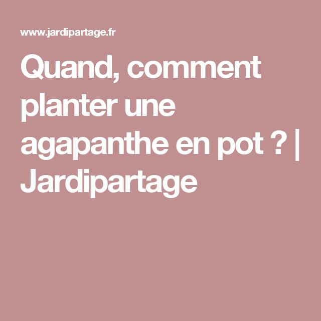Quand et comment planter une agapanthe en pot ...